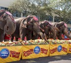 The Ringling Bros. and Barnum & Bailey performing pachyderms celebrated the historic homecoming of The Greatest Show On Earth? to its permanent winter home at Feld Entertainment Studios in Palmetto, FL.