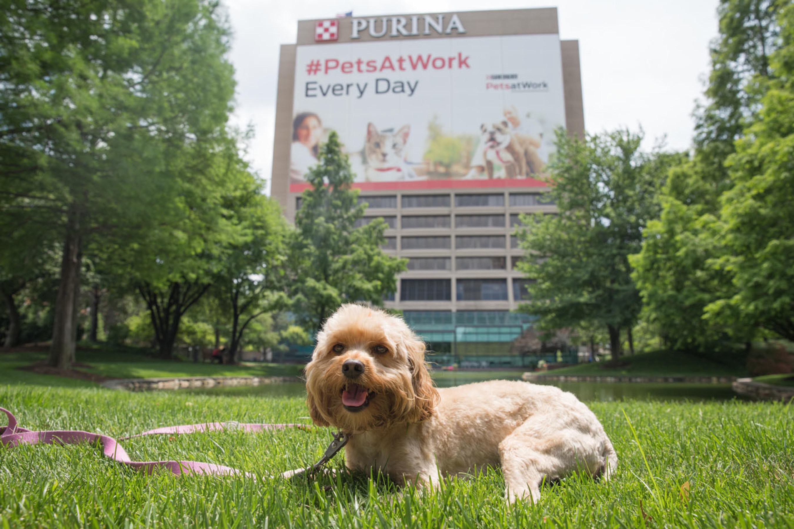 Purina celebrates Take Your Dog to Work Day on June 26 at the Purina headquarters in St. Louis to show how pets and people are better together at work.