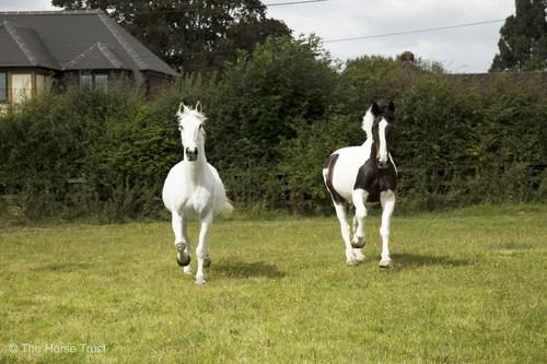 Kilsyth (left) and Mull (right) (PRNewsFoto/The Horse Trust)