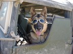 The United States War Dogs Association, a national nonprofit that promotes the long history of military service dogs, establishes permanent War Dog Memorials and educates the public about the invaluable service of these canines to the United States.
