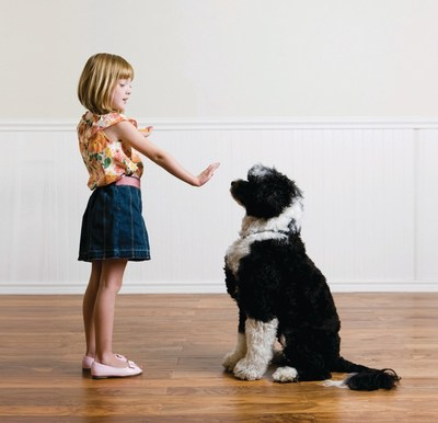 It's never too soon -- or too late -- to train your dog