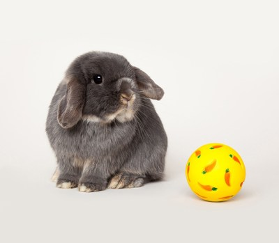 Amazon Pets Competition Propels Effie the Bunny to UK Superstardom (PRNewsFoto/Amazon UK)