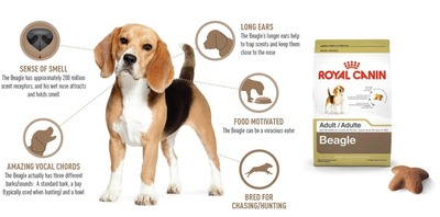 What Makes the Beagle Unique? (PRNewsFoto/Royal Canin USA)
