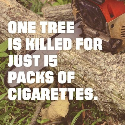 One tree is killed for just 15 packs of cigarettes.