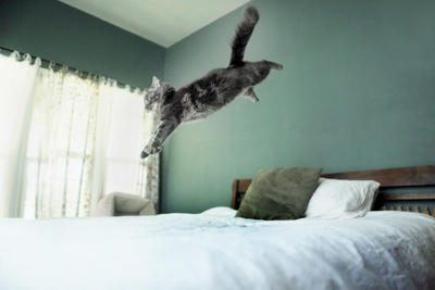 What's So Great About A Cat? 19-Year-Old Photographer Jessica Trinh Embarks On Photo Journey To Find Out