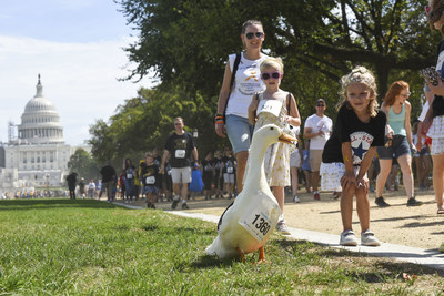 The Aflac Duck joins CureFest's walk for a cure for children's cancer at the National Mall in Washington DC.