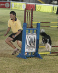 Competitors in the USDAA $10,000 Dog Agility Steeplechase Finals. Photo courtesy of Contact Point Photography. (PRNewsFoto/United States Dog Agility)