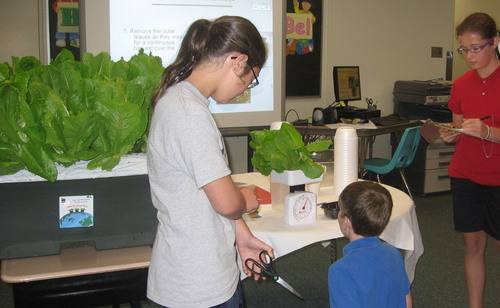 Self-watering garden boxes make it easy for many groups -- from school children to senior center members -- to grow fresh produce virtually anywhere. These students at Dunmore Elementary School in Dunmore, PA grow enough lettuce to feed the entire school on World Food Day each year. The annual project started in 2011, when fifth graders won a science award, and used their prize money to purchase EarthBox garden boxes.  (PRNewsFoto/EarthBox)