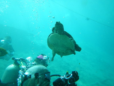 A native of the waters of Florida checks in with Wounded Warrior Project Alumni during a scuba diving class at a Alumni Program event.