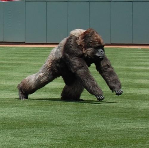 Gorilla Glue Icon Comes To Life In MLB Home Field Debut (PRNewsFoto/The Gorilla Glue Company)