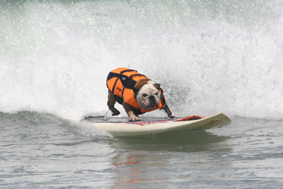 Dogs ride the waves at last year's Surf Dog competition.  (PRNewsFoto/Unleashed by Petco)