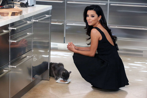 SHEBA(R) Entrees for Cats has launched the SHEBA. Feed your passion.(TM) campaign featuring actress, philanthropist and cat lover Eva Longoria. Visit SHEBA.com/FeedYourPassion to enter for a chance to have the SHEBA(R) brand help feed one of your passions in a big way and to learn more about SHEBA(R) Entrees.  (PRNewsFoto/SHEBA, Casey Rodgers for AP/Invision)