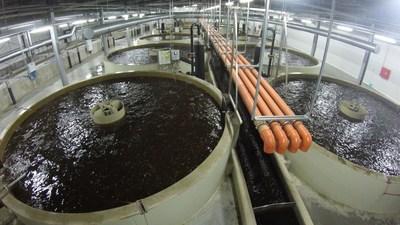 Catfish Indoor Aquaculture facility by Aqua Maof