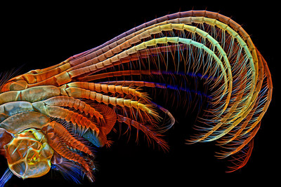 Art meets Science! Visit: OlympusBioScapes.com for awesome microscope images!