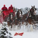 Hold Your Horses: Budweiser Clydesdales Are Here to Stay