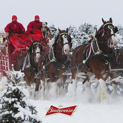 Don't believe everything that trends: the Budweiser Clydesdales aren't going anywhere.