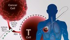 Cryoablation combined with immunotherapy enhances the anti-cancer immune response