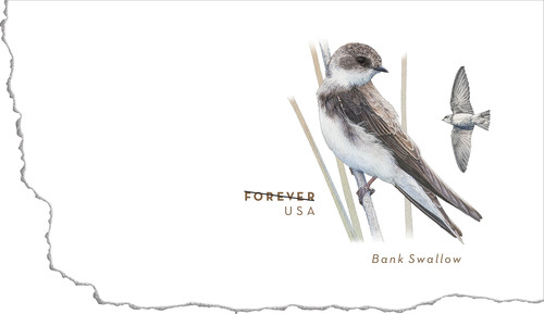 Nature lovers will be aflutter now that the U.S. Postal Service is releasing the Bank Swallow Forever Stamped ...