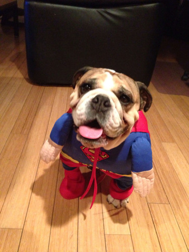 "Milk-Bone(R) Teams Up With Brit + Co. for a Halloween ""Trick or Treat"" Pet Costume Contest. ..."