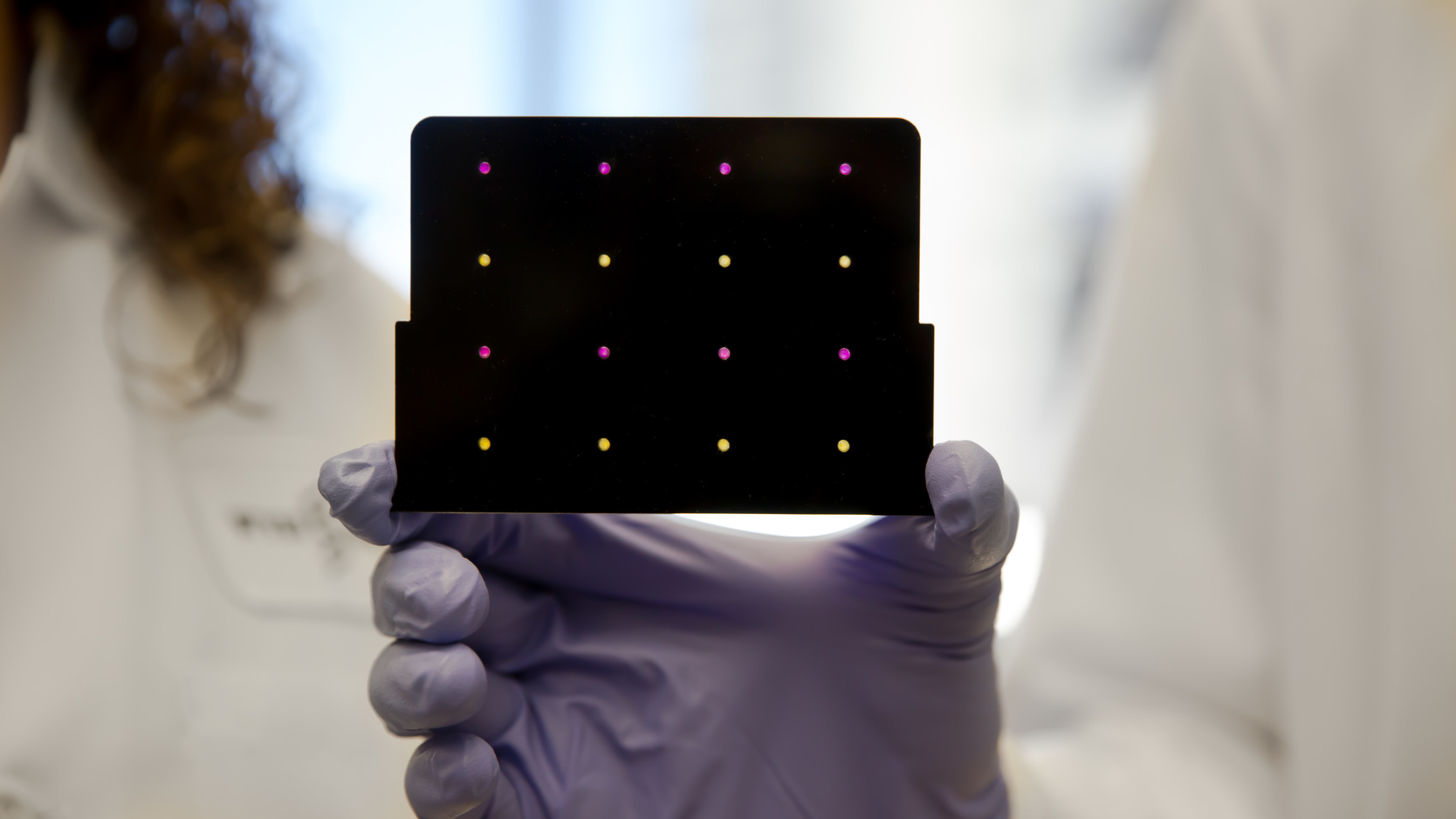 A black cartridge containing a paper-based diagnostic for detecting the Zika virus is held up by a researcher at Harvard's Wyss Institute. Areas that have turned purple indicate samples infected with Zika, while yellow areas indicate samples that are free of the virus. Credit: Wyss Institute at Harvard University