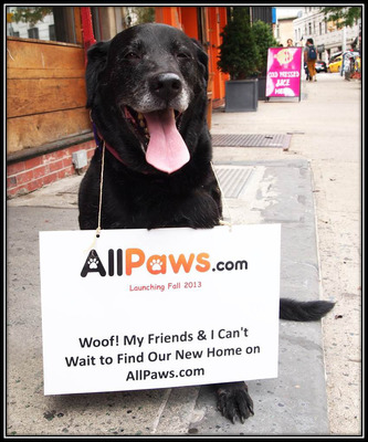 *AllPaws.com* will present a fresh and modern approach to pet adoption that combines the latest in technology, functionality and search.  AllPaws will take online pet listings in a new and exciting direction by offering an online dating style interface complete with advance search tools, direct messaging, match alerts via email, along with a host of other robust features and user friendly tools.  As a result, people will be able to find pets with ease while choosing from a growing list of over 100,000 available animals.  (PRNewsFoto/DCL Ventures, Inc.)