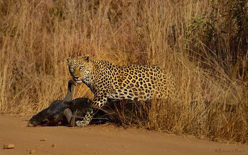 Wildlife at South Africa's Pilanesberg National Park.  (PRNewsFoto/Kruger-2-Kalahari)