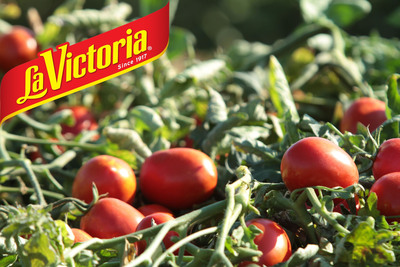 LA VICTORIA® brand tomato fields in Central Valley California