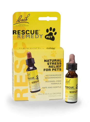 Help Your Pet Stay Calm and Stress-Free this Fourth of July!