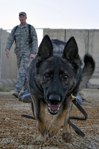 The AAVMC Salutes the Canine Heroes Who Served the Country at Home and at War - and the