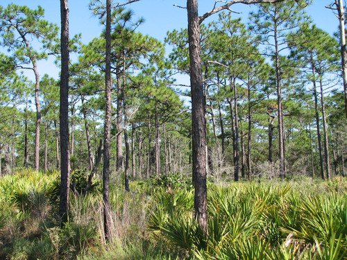 The future of Southern U.S. forests depends in large part on decisions made today by family forest owners, who ...