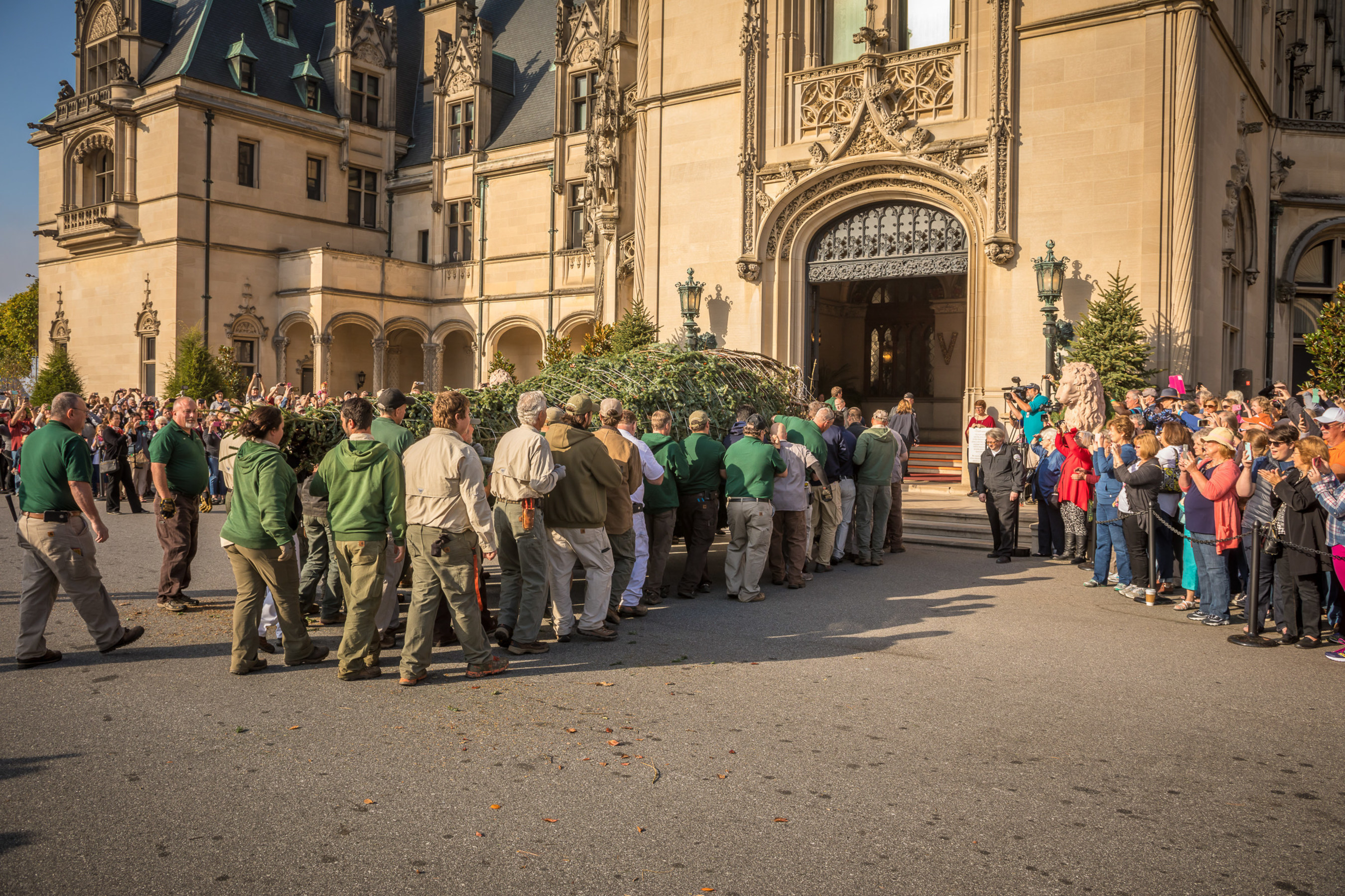 biltmore crew members work together to carry the 3500 pound fraser fir into biltmore house