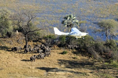 The Elephants Without Borders team flew GEC surveys in their home country of Botswana, which is also home to Africa's largest elephant population with an estimated 130,451 elephants acco...<br /><br />Source : <a href=