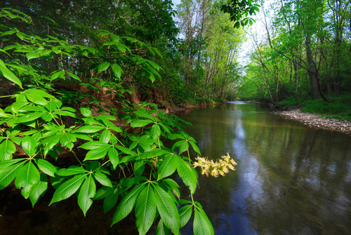 Nature Conservancy Launches 'Natural Treasures of Ohio' Challenge, Inviting Residents to Visit the