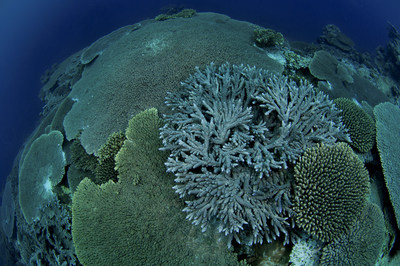 Coral reef in the Austral islands