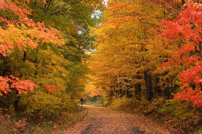 Fall in Michigan captured by Sherry Johnston