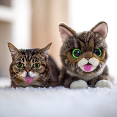 Feline sensation Lil BUB is ready to cuddle up with her fans in a new plush creation from Cuddle Barn, the leading designer and manufacturer of animated plush, set to debut at Toy Fair 2014 in New York City, February 16 - 19. www.cuddle-barn.com. (PRNewsFoto/Cuddle Barn) (PRNewsFoto/CUDDLE BARN)