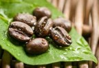 Pure Green Coffee Bean Extracts.  (PRNewsFoto/Green Coffee Bean Max)
