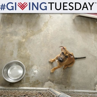 GreaterGood.org one-stop #GivingTuesday destination to help people, pets, and the planet.