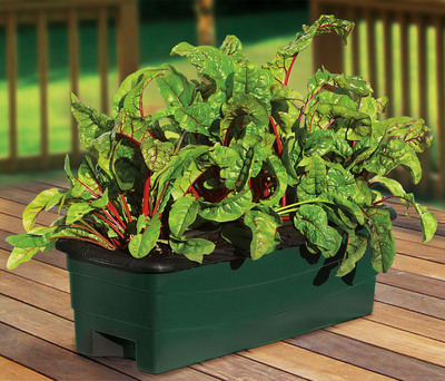 The recently introduced EarthBox Junior container garden kit offers a practical option for people who want to grow their own produce in small spaces, from balconies to patios, window sills to kitchen counters.  (PRNewsFoto/EarthBox)