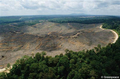 Deforestation in Sumatra, Indonesia