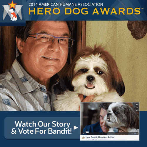 Arthur E. Benjamin's Shih Tzu Bandit is nominated in the American Humane Association's 2014 Hero Dog Awards. American Dog Rescue supporters and all animal lovers are encouraged to vote for Bandit as Hero Dog of the Year at ...