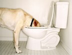 Dog exposed to harmful toilet cleaning chemicals.