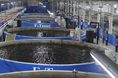 Amg norway a subsidiary of the aqua maof group was for Indoor fish farming
