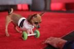 Purina Hosts Better With Pets Summit (PRNewsFoto/Purina)