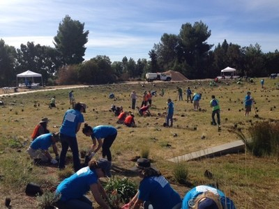 More than 130 Bayer employee volunteers supported pollinator health and habitat development by assisting in the planting of wildflowers at the UC Davis Arboretum and Public Garden.