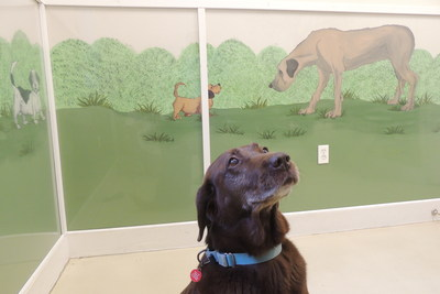 Makrolon(R) AR polycarbonate sheets from Covestro LLC protect and adorn the painted murals at Main Line Animal Rescue (Chester County, Pennsylvania) with maximum effectiveness and aesthetics.