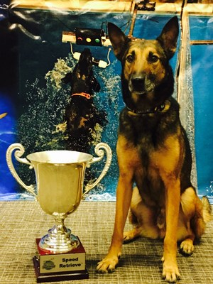 Rescue dog beats cancer and now wins world DockDogs competition in his late years. Heart strings are tugged by this furry champion!