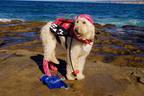 PADI Announces Pet Diver Certification Program.  (PRNewsFoto/PADI)