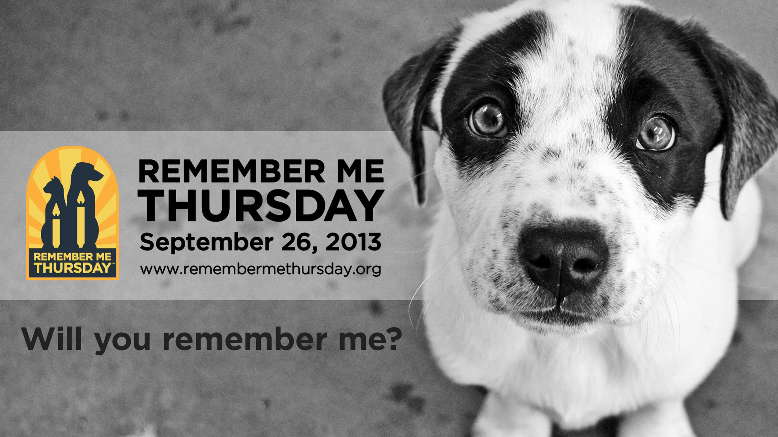 Helen Woodward Animal Center and animal welfare organizations across the globe invite you to honor the ones who lost their lives by shining a light on orphan pets waiting for their forever homes. (PRNewsFoto/Helen Woodward Animal Center) (PRNewsFoto/HELEN WOODWARD ANIMAL CENTER)