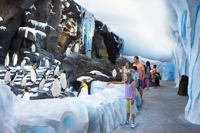 Orlando, Fla. (May 24, 2013) -- Guests to SeaWorld's Antarctica:  Empire of the Penguin(TM) will be among a large colony of penguins including kings, rockhoppers, gentoos and Adelies. Antarctica:  Empire of the Penguin(TM) is a first-of-its-kind, family adventure ride, combining innovative, trackless ride technology and up-close encounters with a huge colony of penguins and opens at SeaWorld Orlando on May 24, 2013.  (PRNewsFoto/SeaWorld Parks & Entertainment)